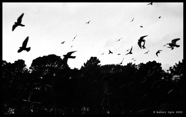 Birds_signed