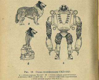 Dogbot1