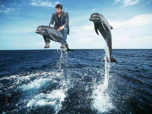 Sad-keanu-dolphin